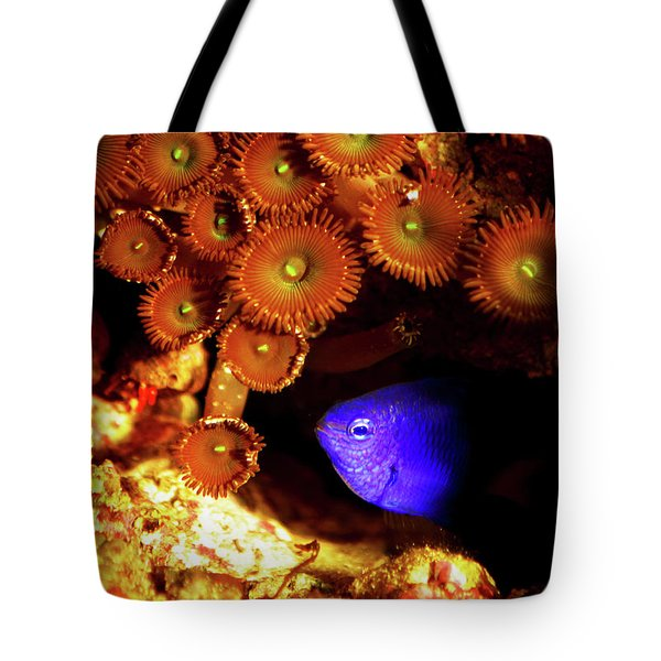Tote Bag featuring the photograph Hiding Damsel by Anthony Jones