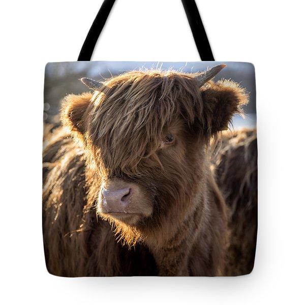 Highland Baby Coo Tote Bag