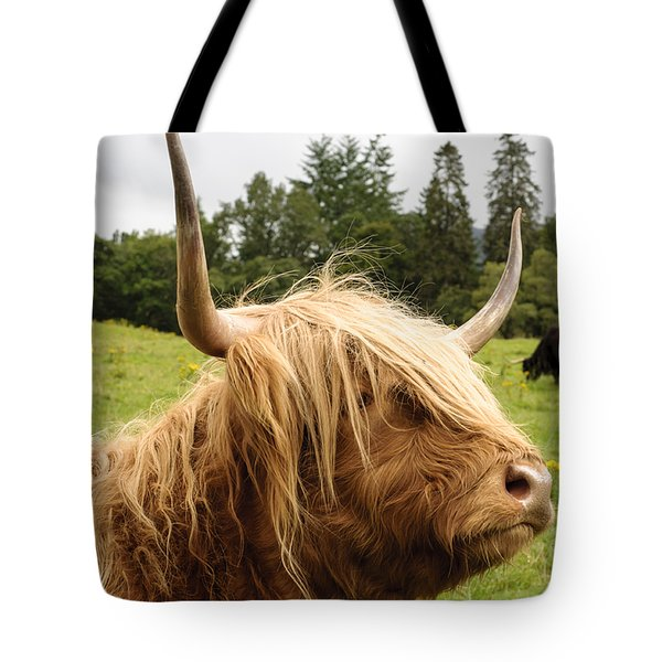 Tote Bag featuring the photograph Highland Coo by Christi Kraft