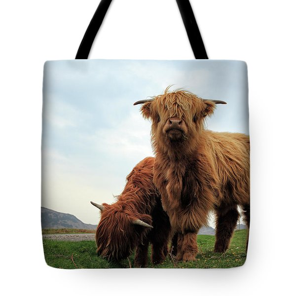 Highland Cow Calves Tote Bag