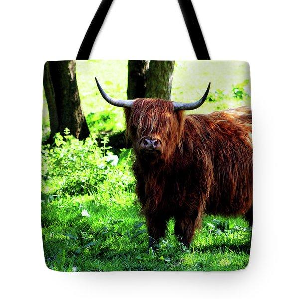 Highland Cow Tote Bag by Dan Pearce