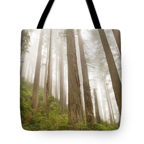 Hike Through The Redwoods Tote Bag