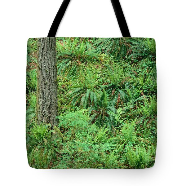 Hillside Ferns Tote Bag by Greg Vaughn - Printscapes