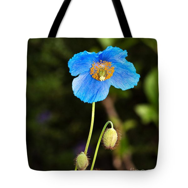 Himalayan Blue Poppy Tote Bag by Louise Heusinkveld