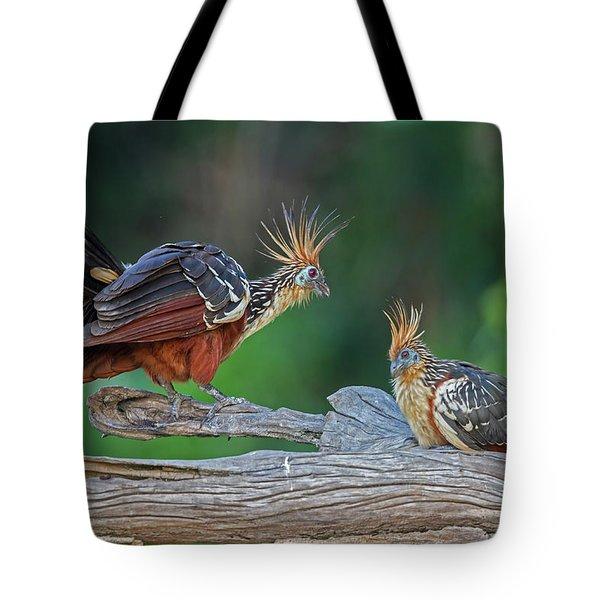 Hoatzins Tote Bag