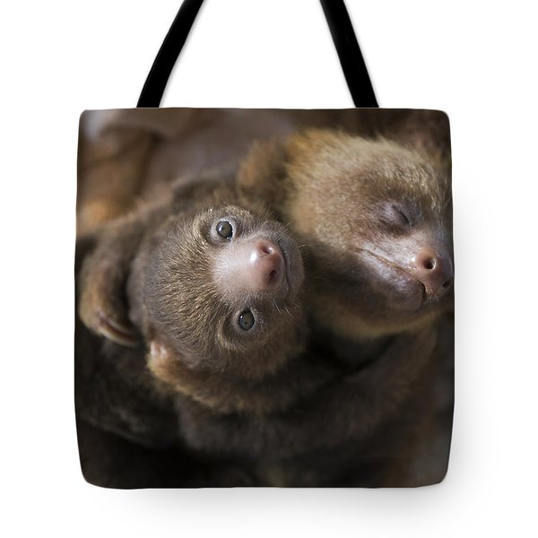 Hoffmanns Two-toed Sloth Orphans Hugging Tote Bag by Suzi Eszterhas