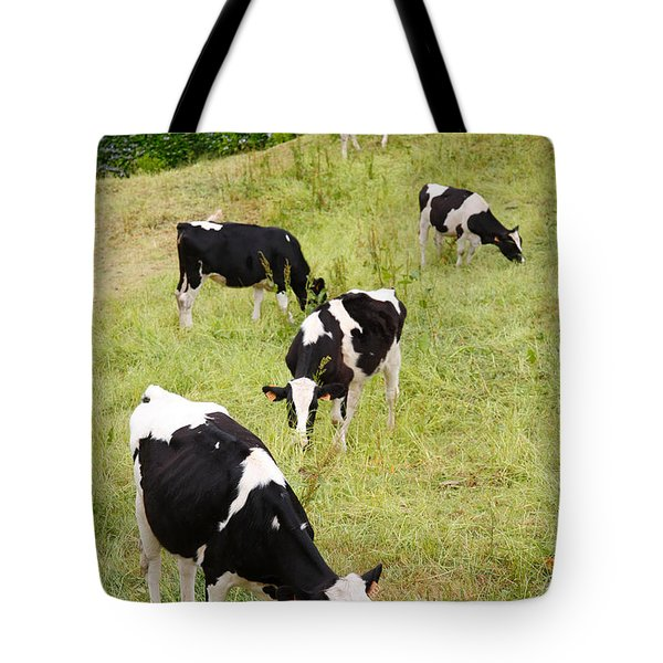 Holstein Cattle Tote Bag by Gaspar Avila