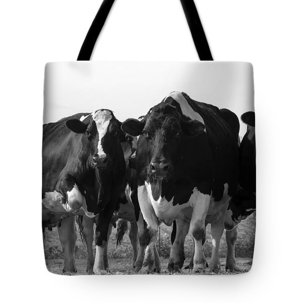 Curious Holsteins Tote Bag