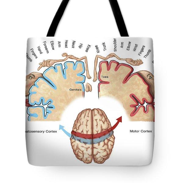 Homunculus Map Tote Bag
