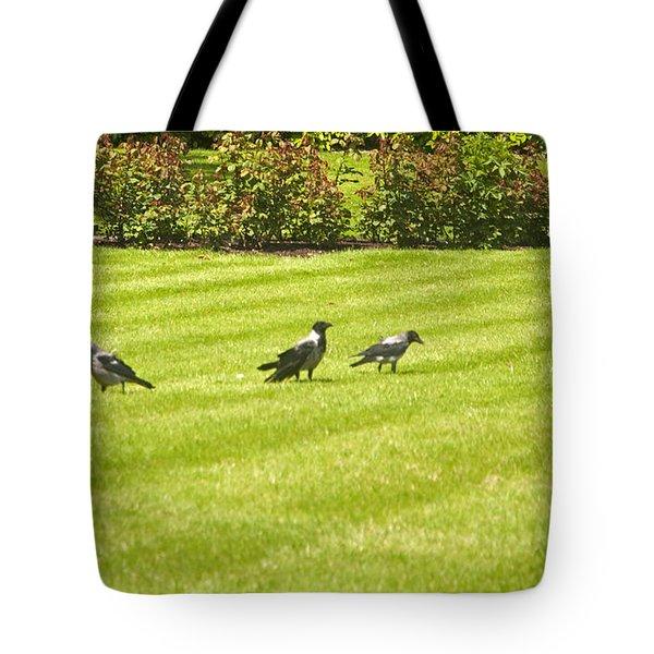 Hooded Crows Ireland Tote Bag