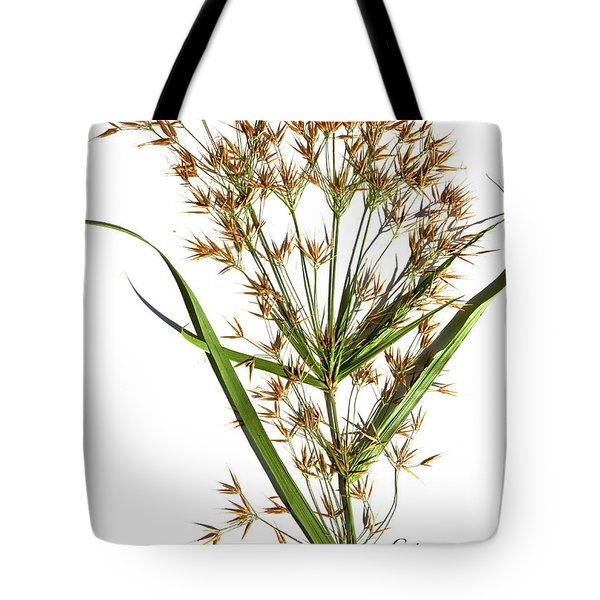 Horned Beak-rush Tote Bag