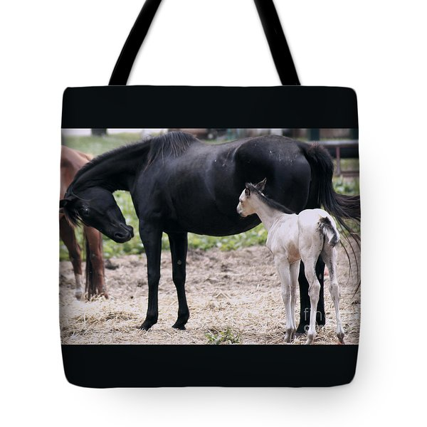 Horse And Colt Tote Bag