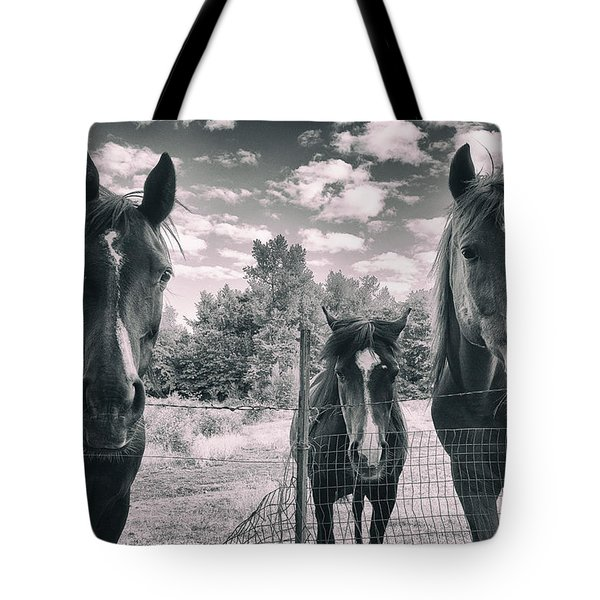 Horse Family Tote Bag
