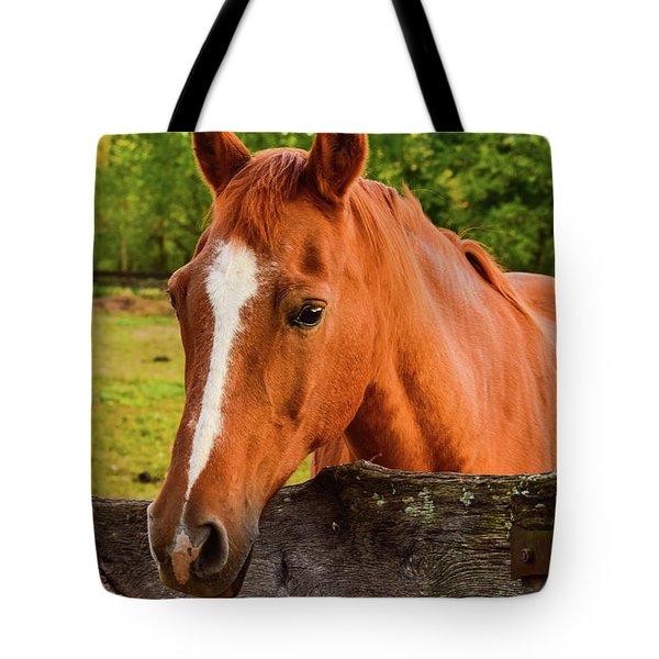 Horse Friends Tote Bag
