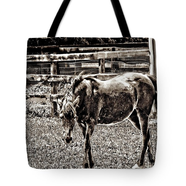 Horse In Black And White Tote Bag by Annie Zeno
