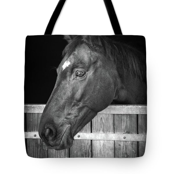 Tote Bag featuring the photograph Horse Portrait by Delphimages Photo Creations