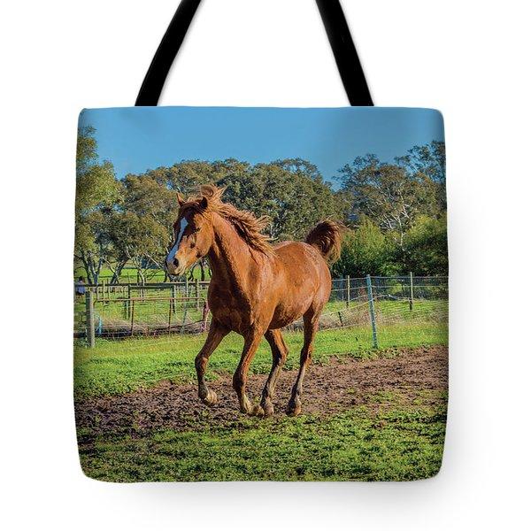 Horse Trot  Tote Bag