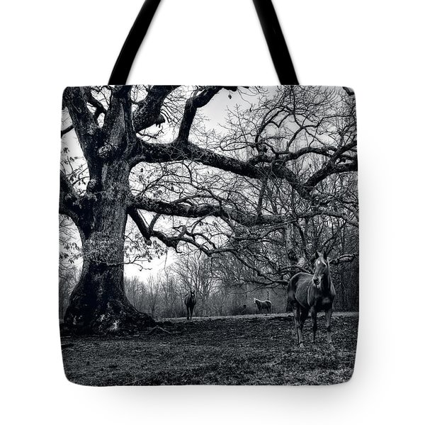 Tote Bag featuring the photograph Horses On A Foggy Morning In Black And White by Greg and Chrystal Mimbs