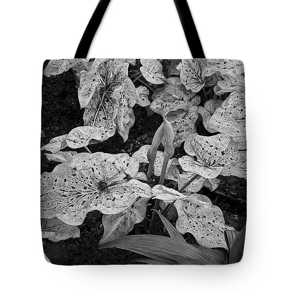 Tote Bag featuring the photograph Hosta Bw - Pla363 by G L Sarti