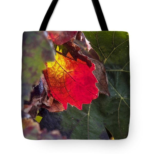 Hot Autumn Colors In The Vineyard Tote Bag