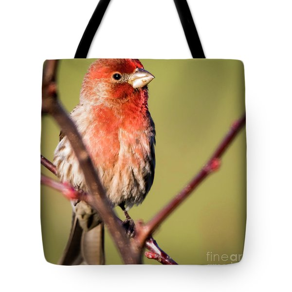 Tote Bag featuring the photograph House Finch In Full Color by Ricky L Jones