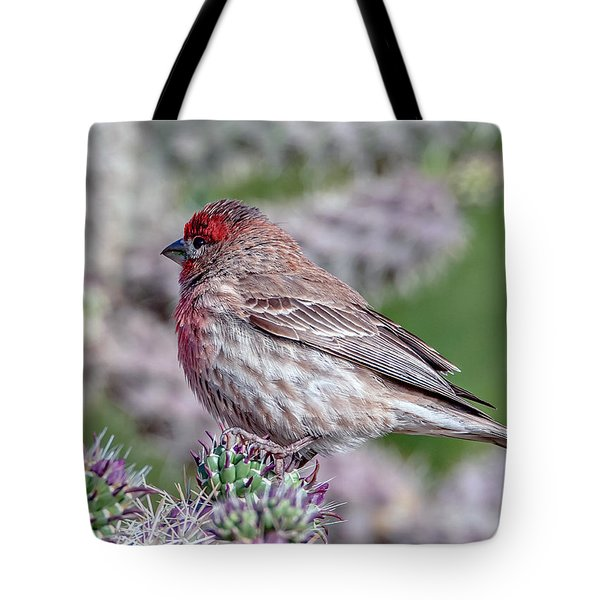 House Finch Male Tote Bag