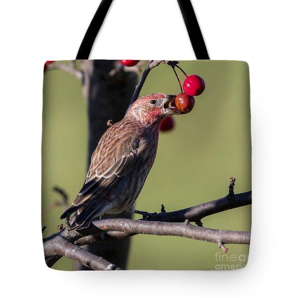 House Finch Vs Crabapple  Tote Bag