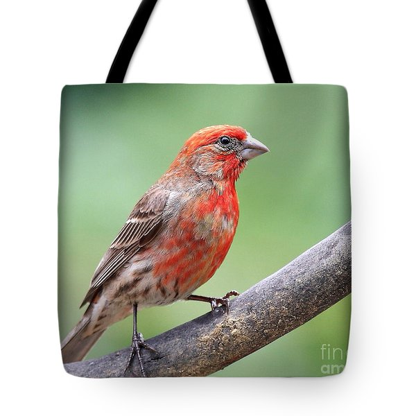 House Finch Tote Bag by Wingsdomain Art and Photography