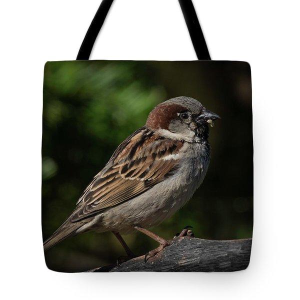 House Sparrow 2 Tote Bag