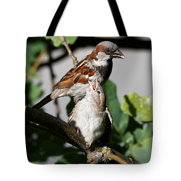 Tote Bag featuring the photograph House Sparrow - Feed Me Daddy by Sue Harper