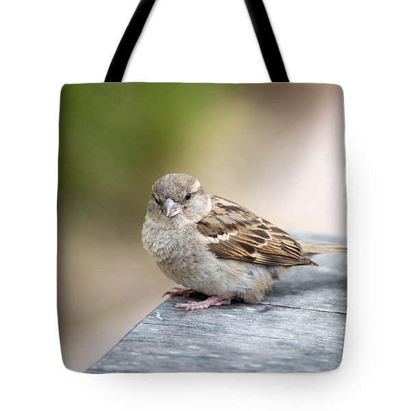 Tote Bag featuring the photograph House Sparrow by Scott Lyons