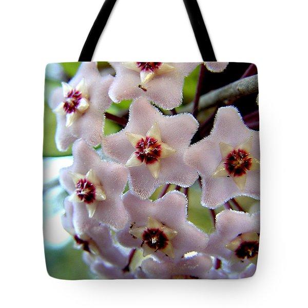 Hoya Blooms Tote Bag