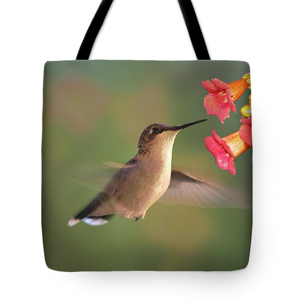 Hummer With Trumpet Vine Flowers Tote Bag