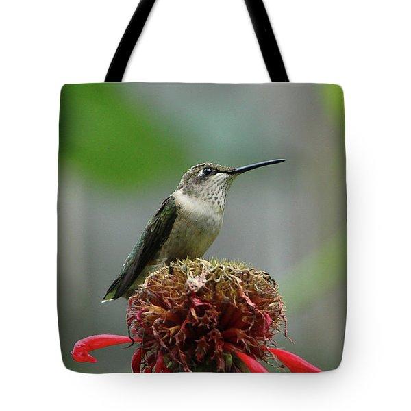 Humming Bird Atop Bee Balm Tote Bag