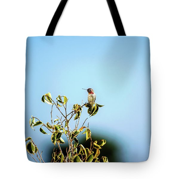 Tote Bag featuring the photograph Humming Bird On A Branch by Micah May