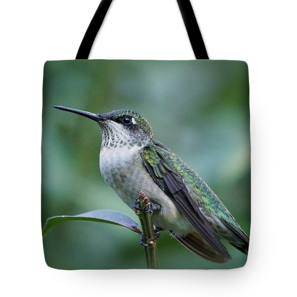Hummingbird Close-up Tote Bag by Sandy Keeton