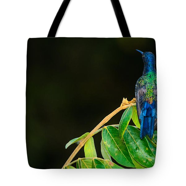 Hummingbird Tote Bag by Daniel Precht