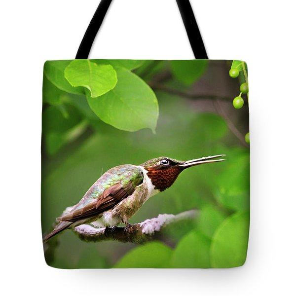Hummingbird Hiding In Tree Tote Bag by Christina Rollo