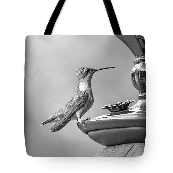 Hummingbird Intrigue  Tote Bag