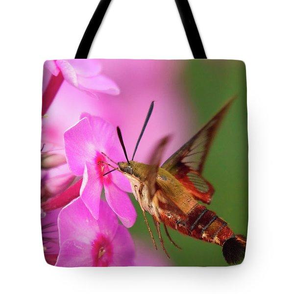 Hummingbird Moth Feeding 1 Tote Bag