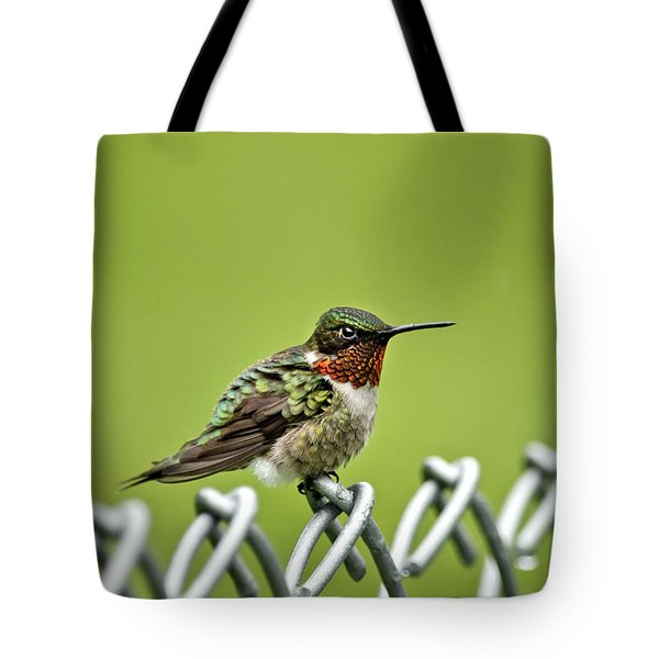 Hummingbird On A Fence Tote Bag by Christina Rollo