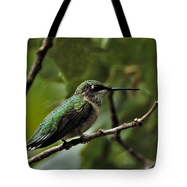 Hummingbird On Branch Tote Bag