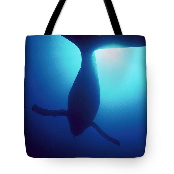 Humpback Whale Megaptera Novaeangliae Tote Bag by Flip Nicklin