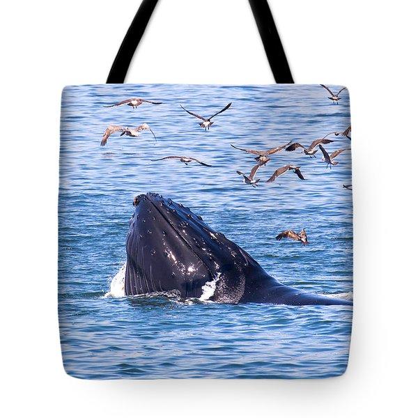 Humpback Whale Tote Bag