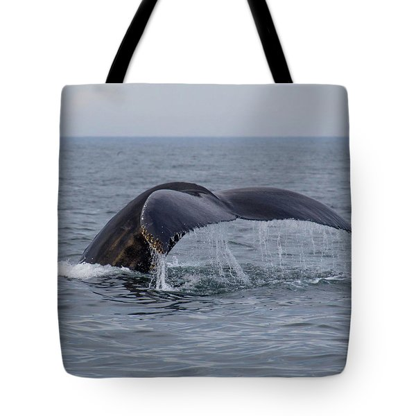 Humpback Whale Tote Bag by Trace Kittrell