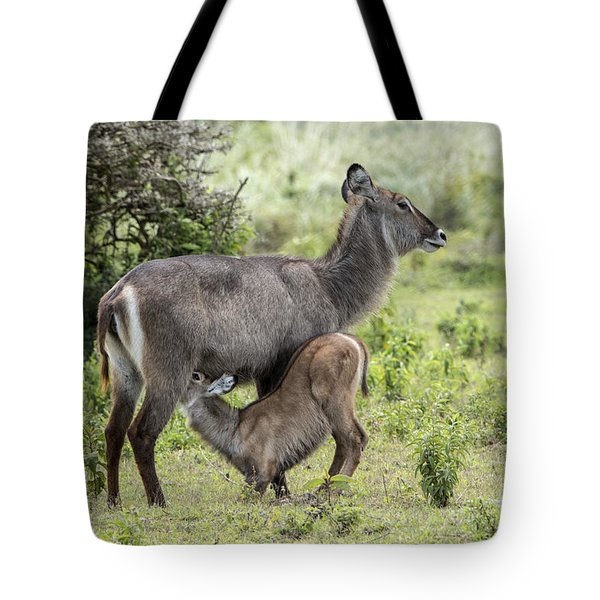 Tote Bag featuring the photograph Hungry Baby by Pravine Chester