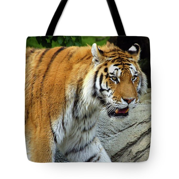 Hungry Cat Tote Bag by Gordon Dean II