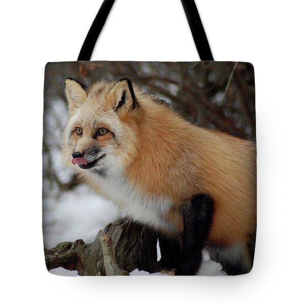 Tote Bag featuring the photograph Hungry Fox by Richard Bryce and Family