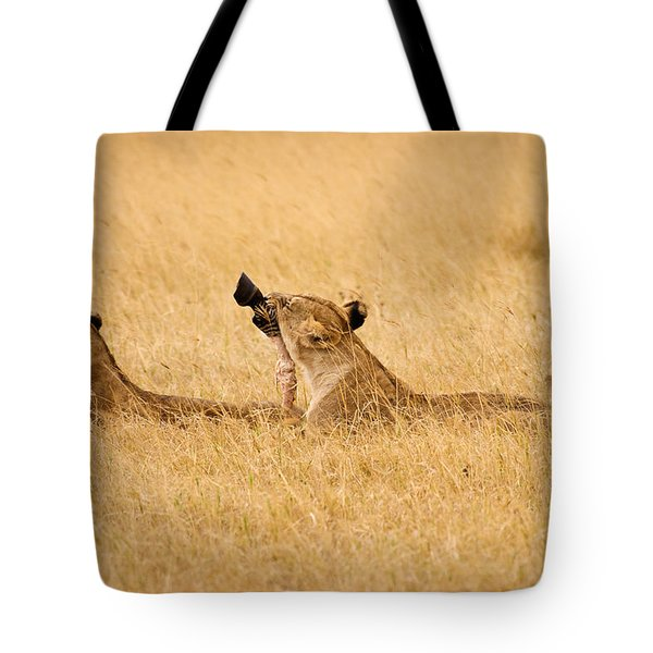 Hungry Lions Tote Bag by Adam Romanowicz