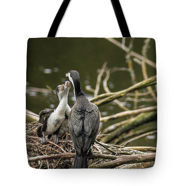 Hungry Pied Shag Chicks Tote Bag